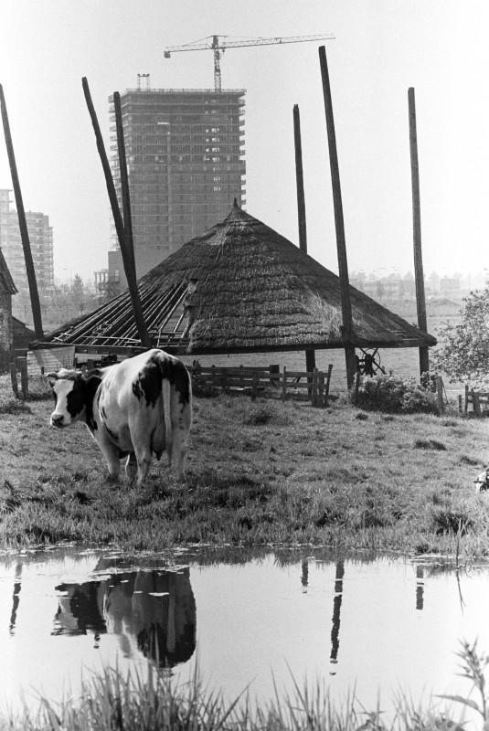 Koe en Palenstein, foto Wim Goutier
